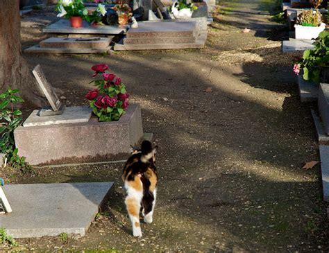 dieren begraven in je tuin dierenbegraafplaats als laatste rustplaats dierenarts