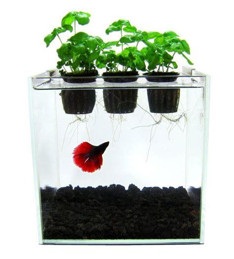 images  mini aquaponics  pinterest
