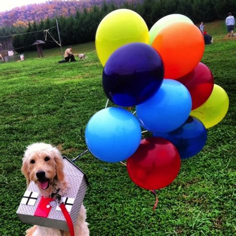 house for dogs movie creative halloween costumes for dogs