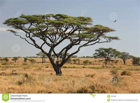 Chess Styles Africa Landscape 027 Serengeti Royalty Free Stock Photos