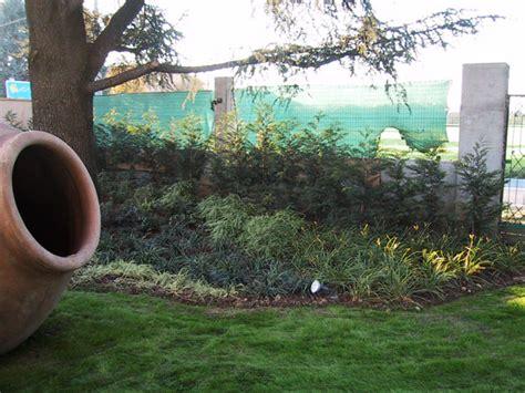 piante da giardino ombra piante da ombra piante da giardino sogno immagine spaziale