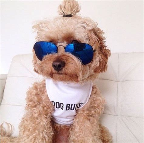 dog with man bun ridiculously cute dog buns are so much better than man