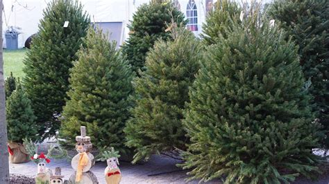 christmas tree sale orchard hardware what tree shortage growers industry advocates say demand finally in line with supply