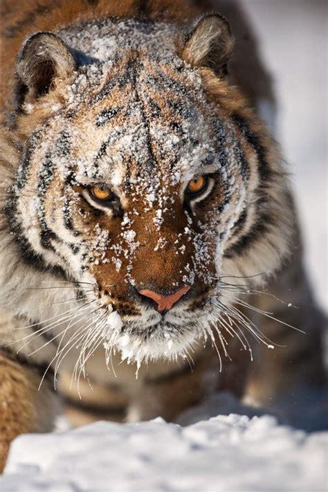 imagenes increibles de animales increible fotos de animales friki net