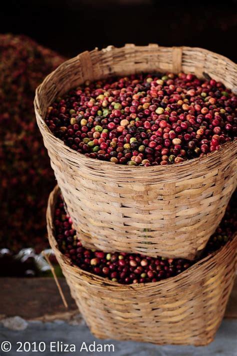 Coffee Bean Jogja baskets of coffee beans yogyakarta indonesia farms