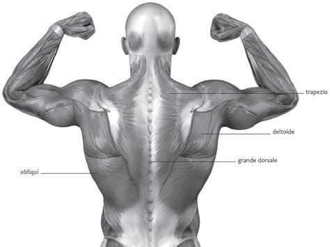 tavole anatomiche muscoli muscoli tronco parole chiave