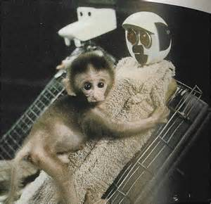 harlow s contact comfort harlow s monkey experiment 8 famous psychology