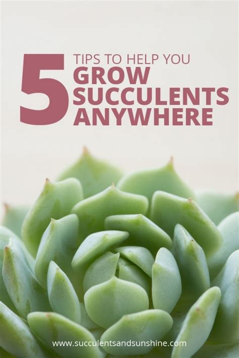 Propagating Succulents Can Be Done By Using The Offsets - tips for growing succulents anywhere succulents and