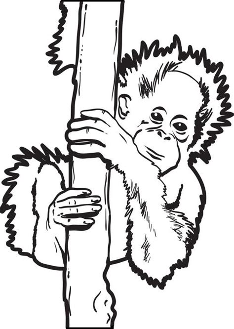 Outline Drawing Orangutan by Orangutan Coloring Pages Getcoloringpages