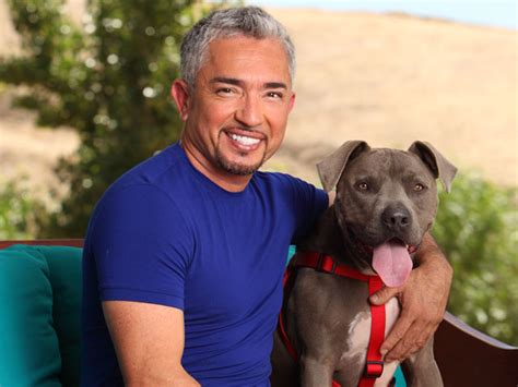 cesar millan puppy cesar millan saving the satos s stray dogs repeating islands