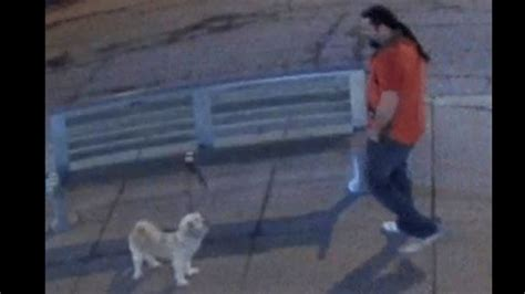 girl tied to bench male suspect stole dog that was tied to bench by owner