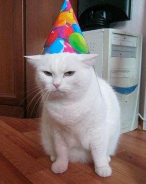 imagenes cumpleaños gatitos fotos y gifs de perros y gatos celebrando su cumplea 241 os