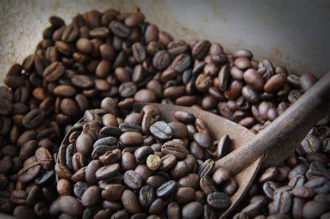 Luwak Coffee luwak coffee interesting or disgusting from malaysia