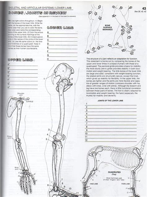 anatomy coloring book appendix a the anatomy coloring book by website inspiration