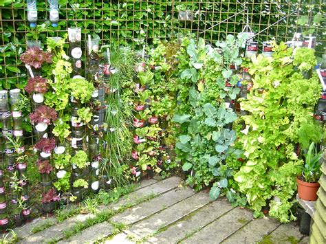 Patio Vegetable Gardening by Reasons To Grow Vegetables At Home Outsiders Within
