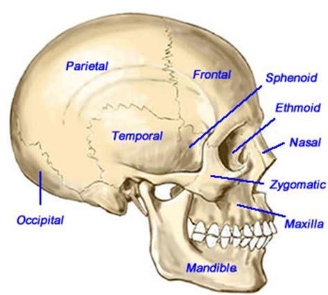 Gelang Kulit Model Tengkorak Skull 11 sistem gerak pada manusia bahan ajar kelas viii belajar