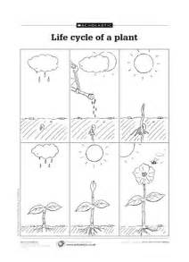 life cycle of a plant free primary ks1 teaching resource
