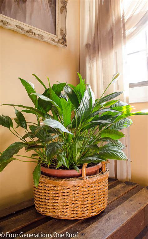 typical house plants common house plants my mom her plants page 7 of 8 four generations one roof