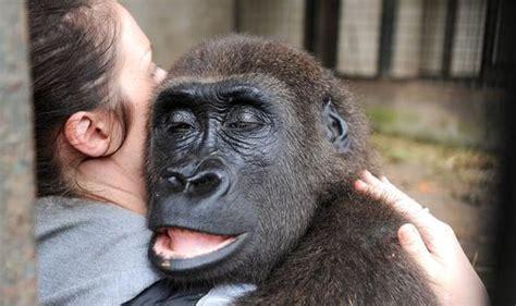 News Roundup Bushfires Jellyfish And Gorillas Attack by Gorilla Victim Of Poachers Saved By Brit Uk News