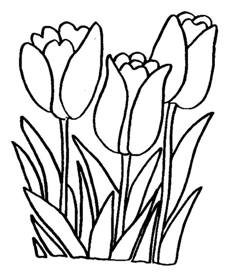 printable tulip coloring pages coloring me