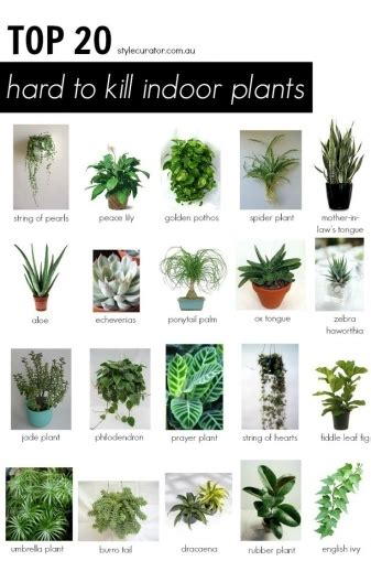 1000 ideas about house plants on pinterest plants indoor plant care and planting gorgeous 1000 ideas about best indoor plants on pinterest