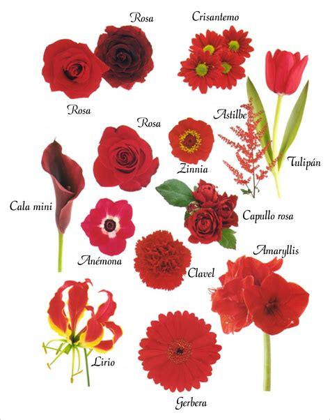 imagenes de flores y sus nombres related keywords suggestions for nombres de las flores