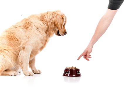 food aggression in dogs preventing and correcting food aggresion in dogs