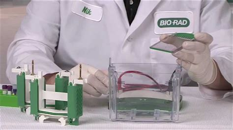 western blot cassette setting up and running mini protean 174 tgx precast gels