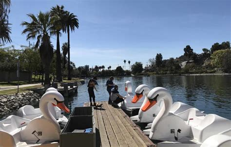 swan boats la you can now ride swan boats at echo park lake