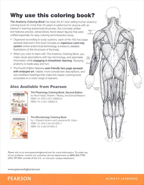 princeton review anatomy coloring book pdf anatomy coloring book 4ed 011111 details rainbow