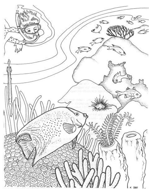complicated fish coloring pages 7 best coral reef coloring pages images on pinterest