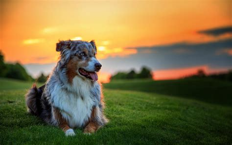 dogs wallpapers full hd 1080p best hd dogs wallpapers gg yan dogs wallpapers full hd 1080p best hd dogs wallpapers