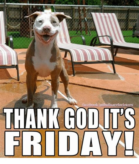 Thank God Its Friday Memes - facebook pitbullsareforlovers thank god its friday it s