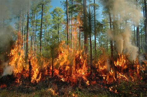Sink Styles by Scientists To Burn Ozark Forest To See If Fire Creates