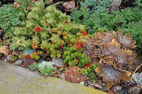 1000 Images About Rock Gardens Ground Covers On Succulent Rock Garden