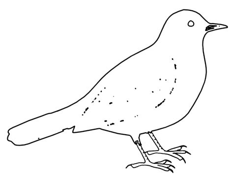 Coloriage Oiseau Merle Noir