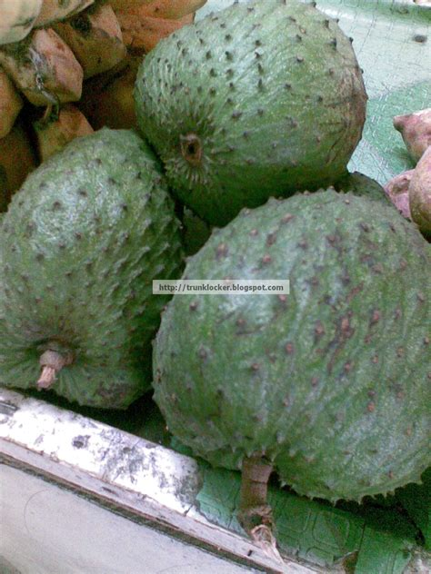 g fruit graviola miracle fruit graviola guyabano cure for cancer