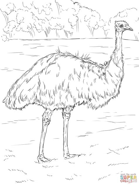 emu coloring page free realistic emu coloring page free printable coloring pages
