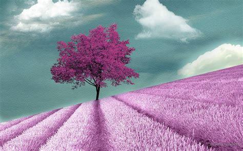 purple tree purple tree wallpapers wallpaper cave