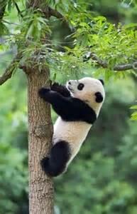 panda möbel pandas pandas beb 233 s and heno on