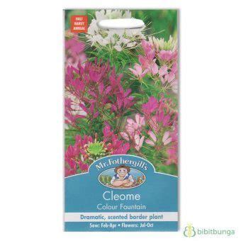 Benih Bunga Mr Fothergills Import Nigella In A Mist benih cleome colour 250 biji mr fothergills bibitbunga