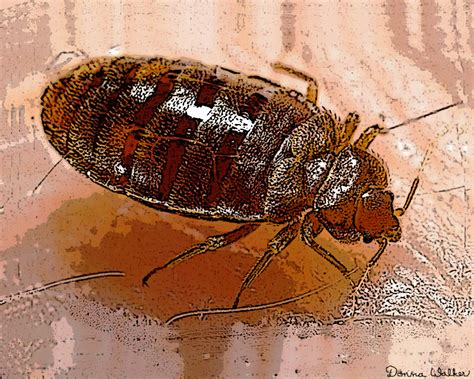 bed bug epidemic bed bugs in assisted living facilities hearts pest management