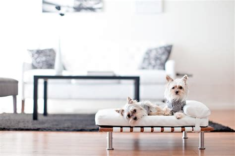 awesome modern dog beds modern dog beds style
