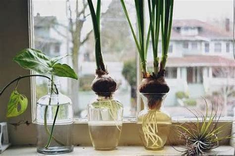Plants For Windowsill by Windowsill Gardening A Definite Place For Fresh Veggies