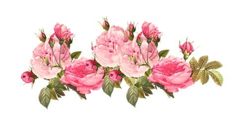 rose pattern png flowers peonies pink tumblr