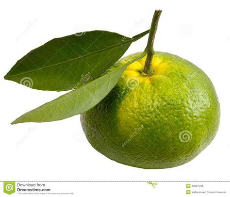 imagenes de naranjas verdes image gallery naranjos verde