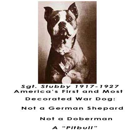 Sgt Stubby Pitbull 17 Best Images About World War 1 On American Soldiers Battle Of The Somme And