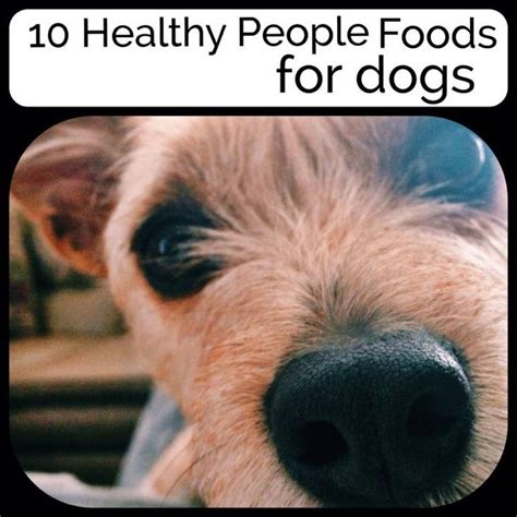 best human food for dogs best 20 human food for dogs ideas on