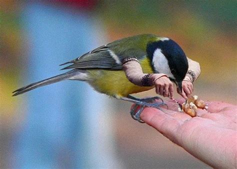 if birds have arms photoshopped