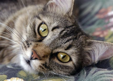 8 Ways Your Cat Shows It You by 10 Signs Your Cat You